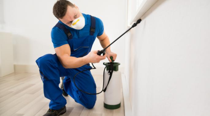 2 Benefits Of Availing Professional Termite Services