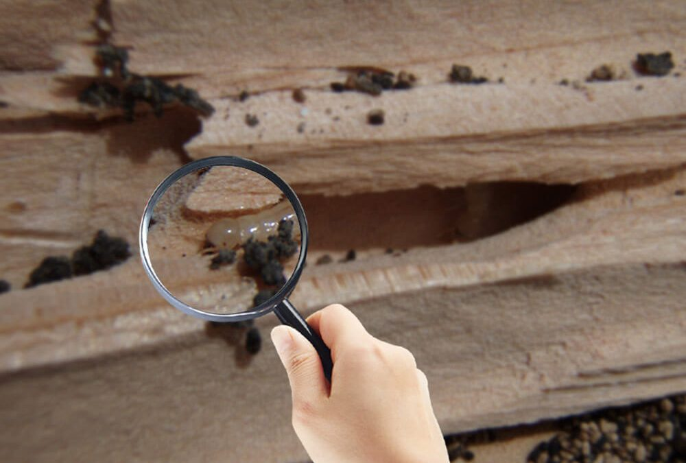 Signs That You Need Control For Termite Services In Fort Lauderdale